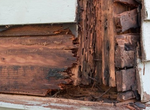 Termite Damage from a Wood Frame Home